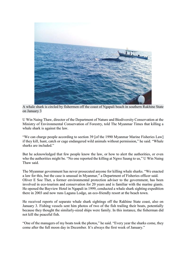 Whale shark return highlights challenges of conservation_002